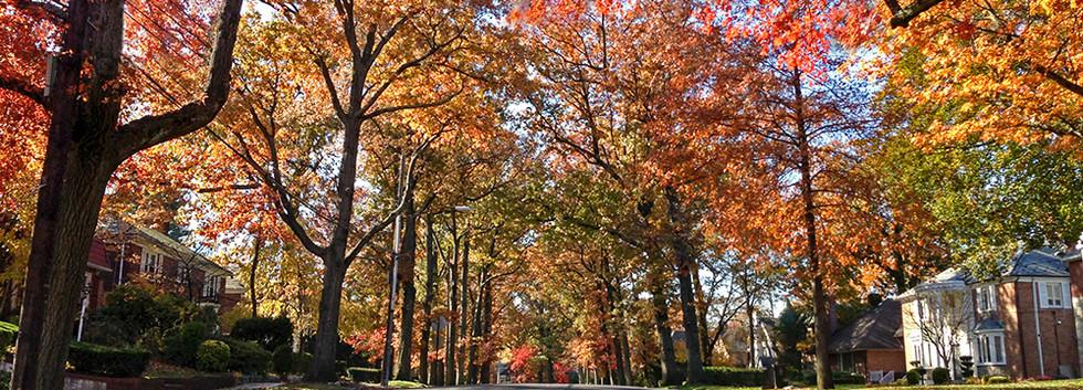 Autumn Midland Parkway.jpg