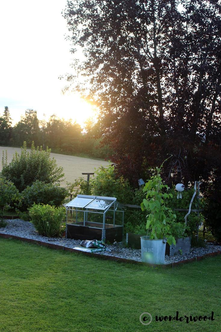 kjøkkenhage // kitchen garden