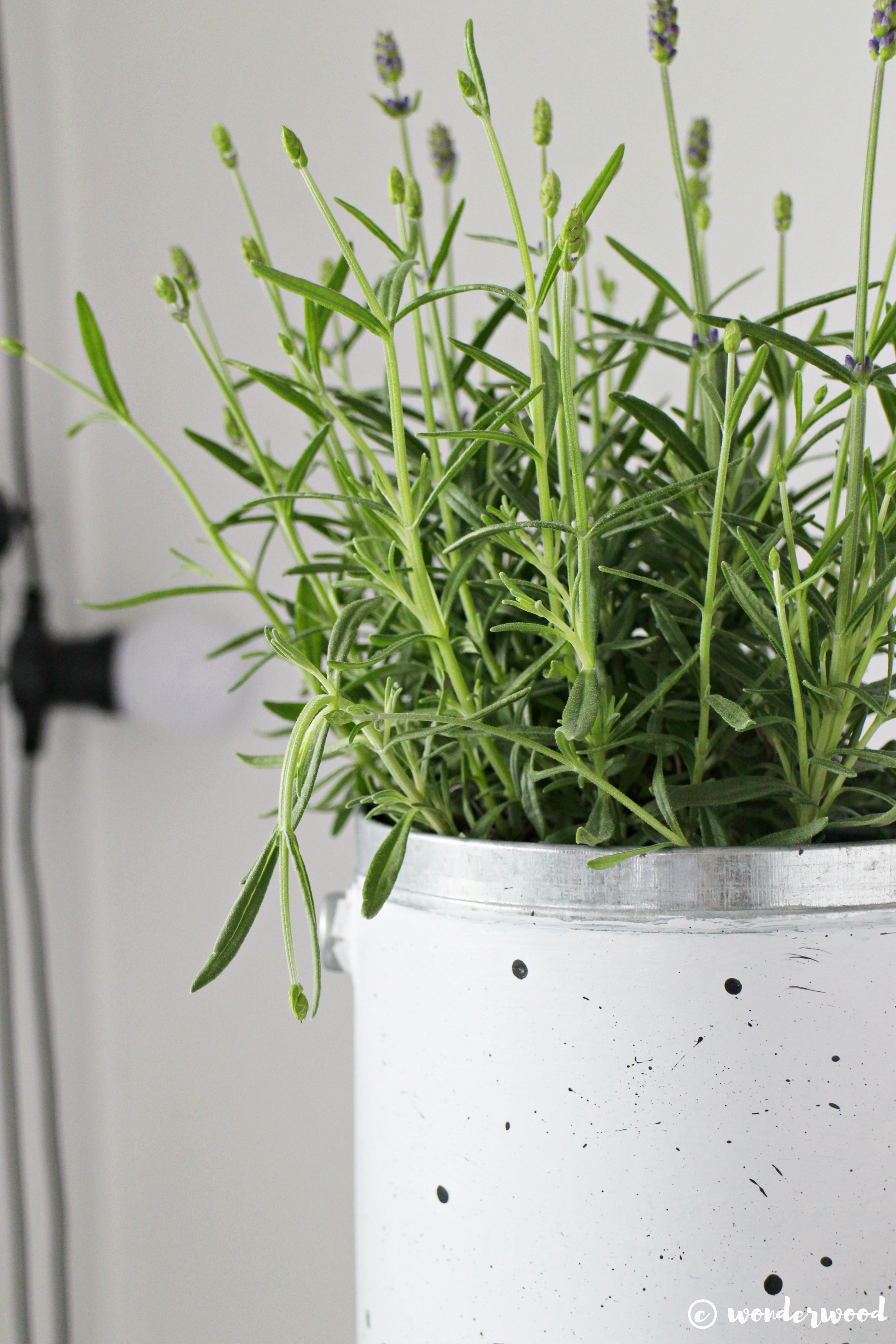 speckled flowerpot