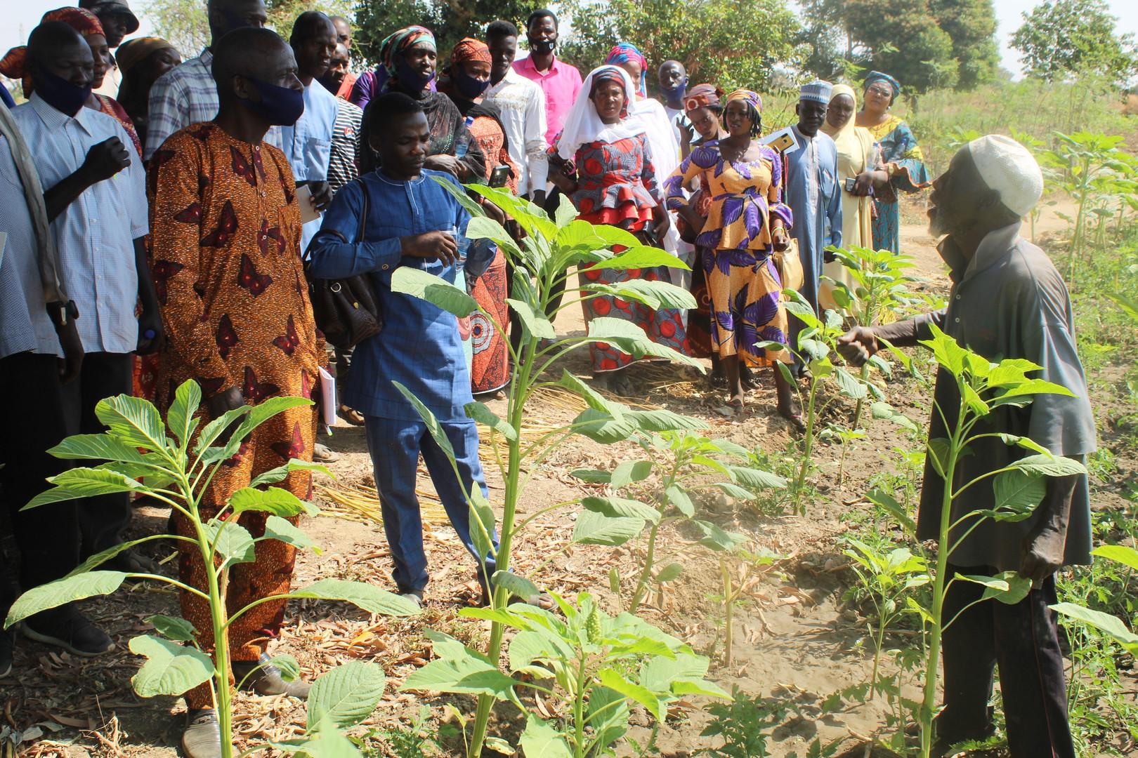 During the dry season farming training (