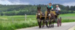 Web_Head_Kutsche_980x400px_150dpi.jpg