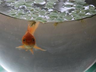 Bunte Barcode Fische für die Forschung