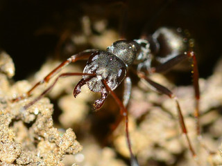 Industrie 4.0 von Ameisen lernen?