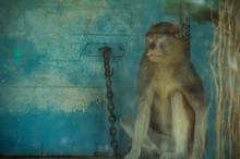 Mono patas