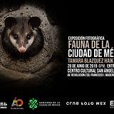 Invitacion Expo Fauna.jpg