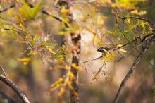 Autumn warbler