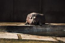 Hipopótamo en Aragón