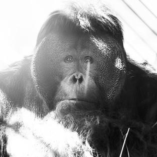 La crisis de los zoológicos