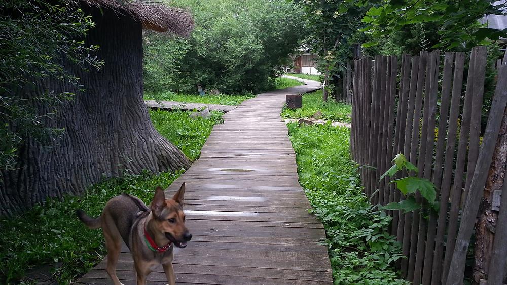 Печки Лавочки Борисовское