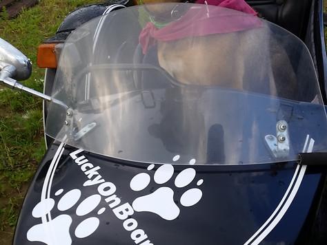 Как подготовиться к путешествию с большой собакой на мотоцикле