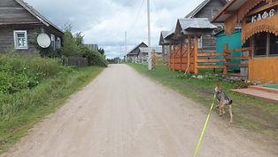 путешествия по России, путешествия с собакой
