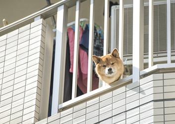ペット飼育禁止のマンション
