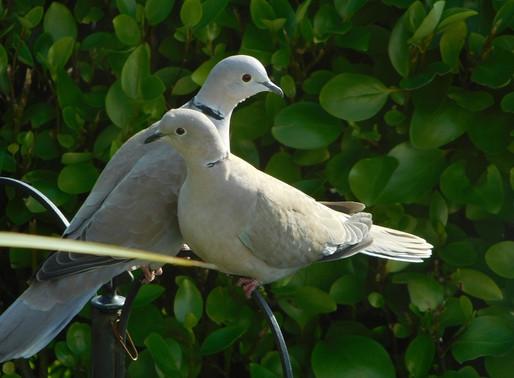 Covid, Copywriting & Love Birds on the Lawn