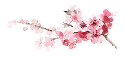 Custom watercolor cherry blossoms 2