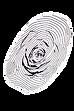 ByNavideh_FloralDesign-03.png