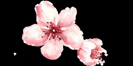 Custom watercolor cherry blossoms 3
