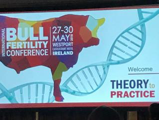 Bull Fertility