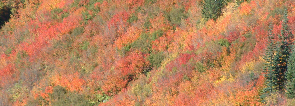 Fall Colors, Stevens Pass