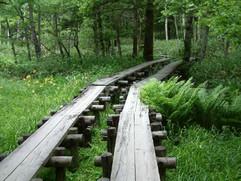 Kamikochi Path