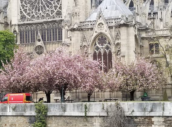 Notre Dame the day after fire
