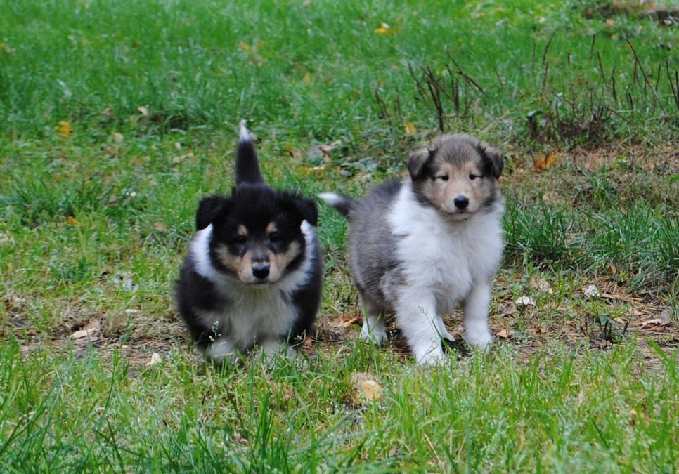 Remy ja Tino