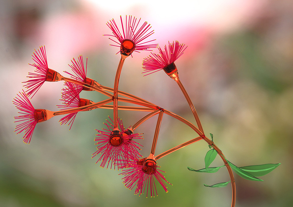 Bloodwood Blossom