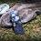 Thumbnail: Tanzan Aura, Moonstone, Petalite Pendant. Set in Clay, Lemurian Crystals...