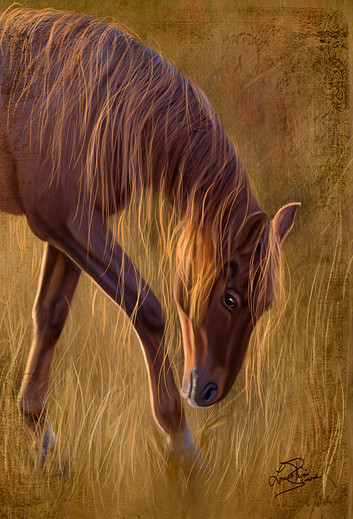 Le cheval - The horse