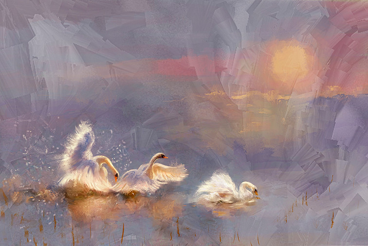 Cygnes - Swan