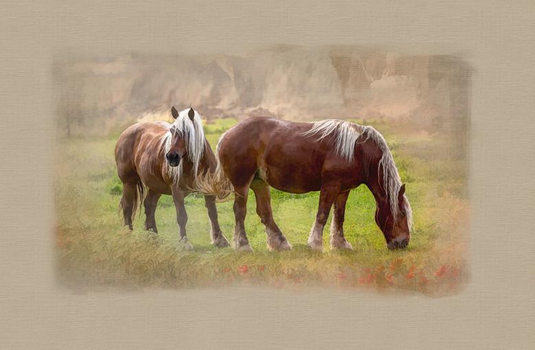 Chevaux- horses