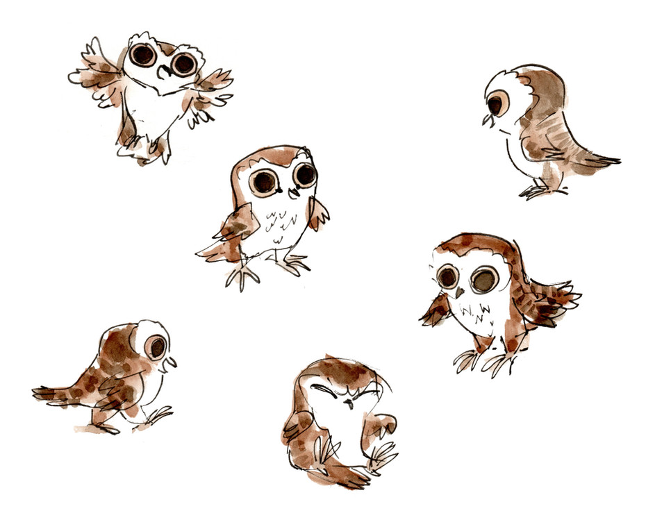 Owlie Studies