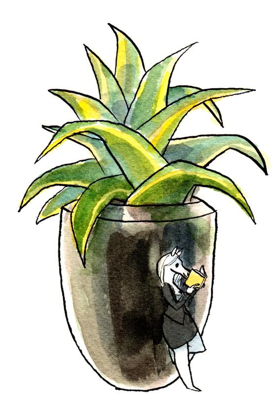 WC -- Succulent Show 2016 -- Office Read
