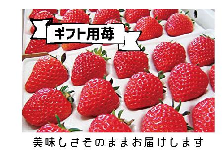 ギフト用苺.png