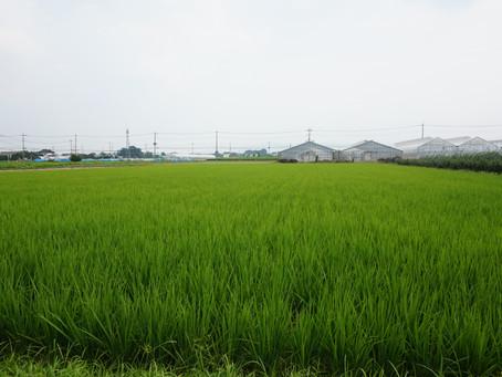 橋本農園さんの畑にお邪魔してきました