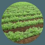 野菜産地・千葉県