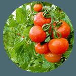 野菜産地・与論島