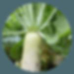 野菜産地・鹿児島県