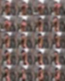 Schermafbeelding 2019-03-05 om 19.24.34.