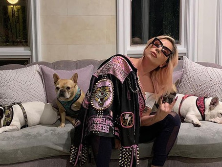 Cachorros de Lady Gaga são devolvidos após roubo em Los Angeles