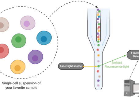 Analyzing your favourite cells: Flow Cytometry, the basics