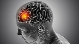 Glioblastoma: a deadly game of hide and seek