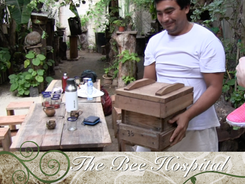 A visit to the Mayan bee hospital
