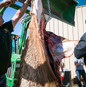 Felix Florez butchering Elk - photo by E