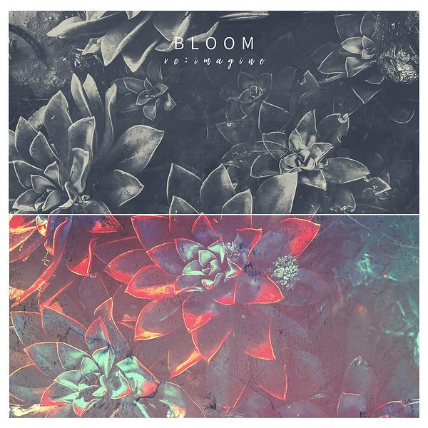 Bloom_BenLaver_Artwork.png
