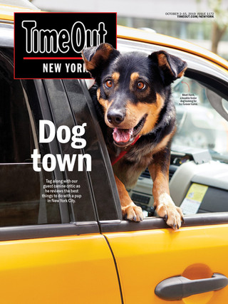 1172.pets.cover.jpg