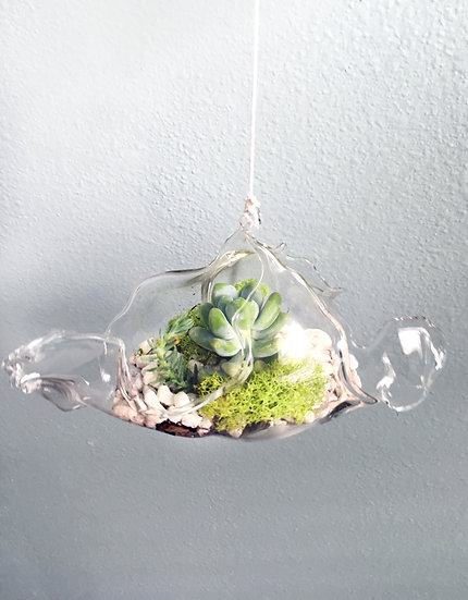 Hanging Terrarium Succulents