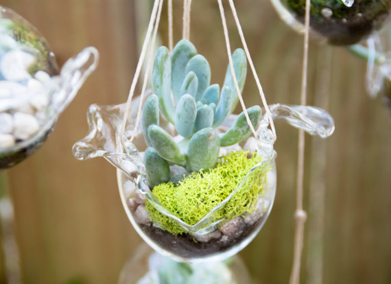 Cradle Me Happy Hanging Terrrarium