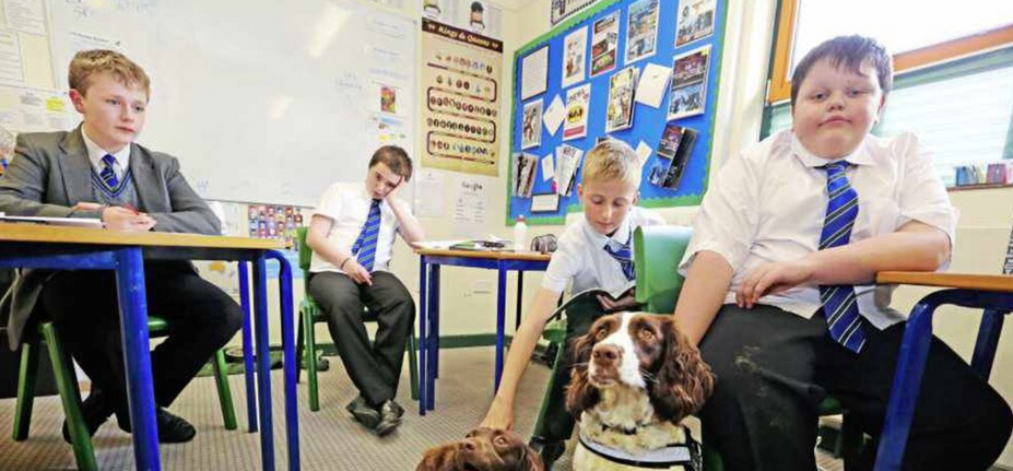 Schools using Therapy Dogs to Calm Pupils in Classrooms