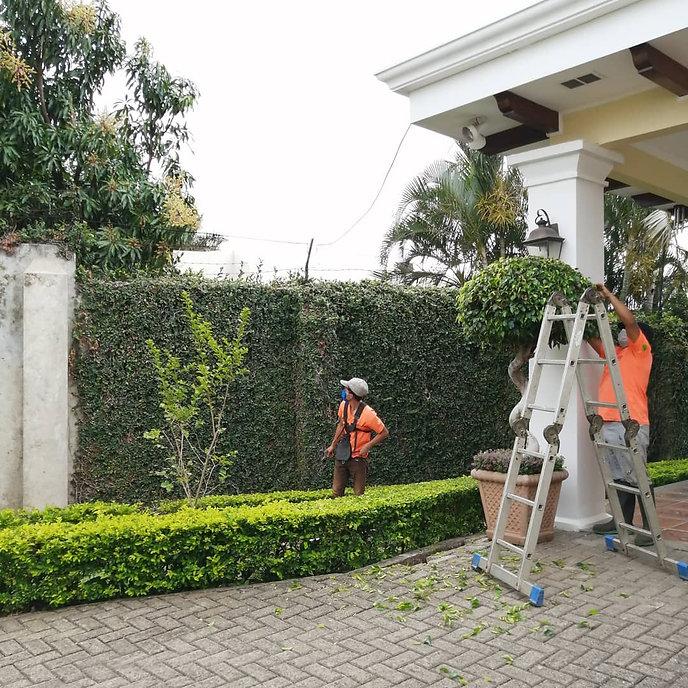 Mantenimiento de jardines, podas de hiedra y poda de arbustos