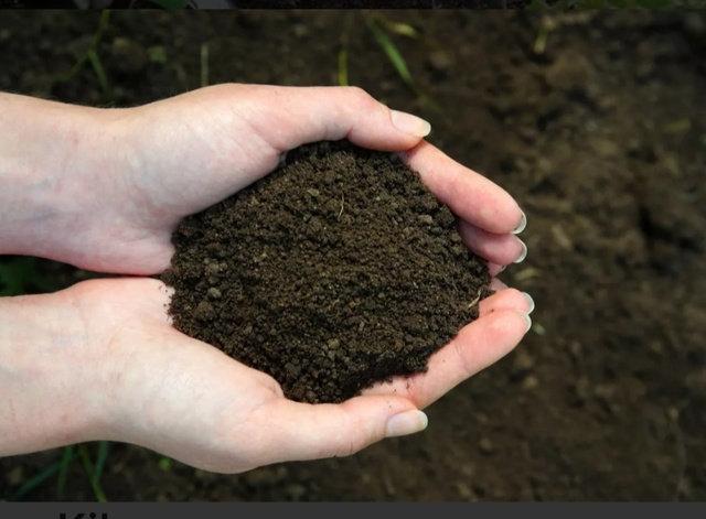 Tierra vegetal/negra
